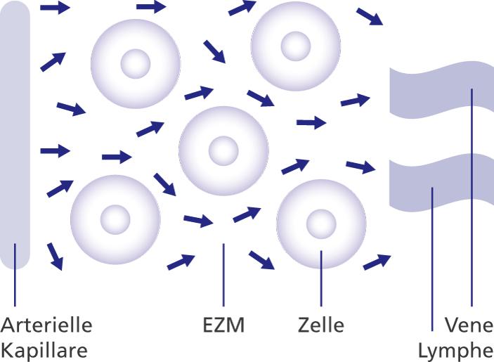 Schema der Mikrozirkulation